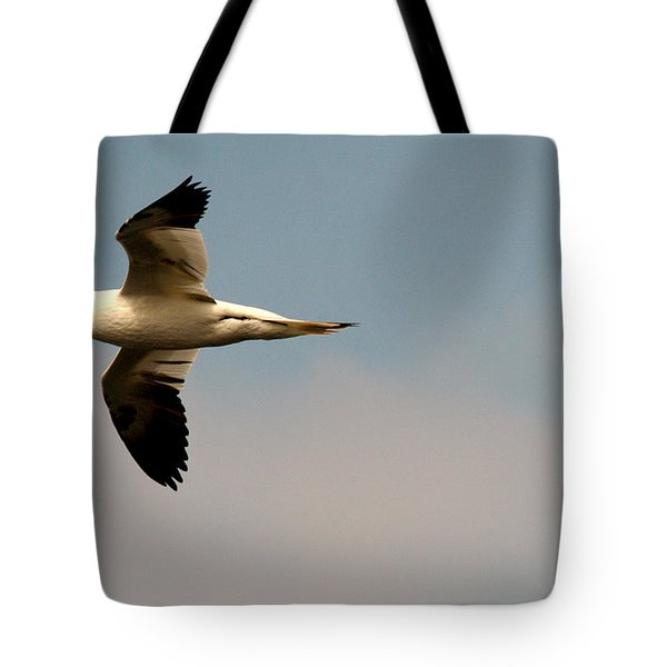Yellow Headed Gull In Flight Tote Bag