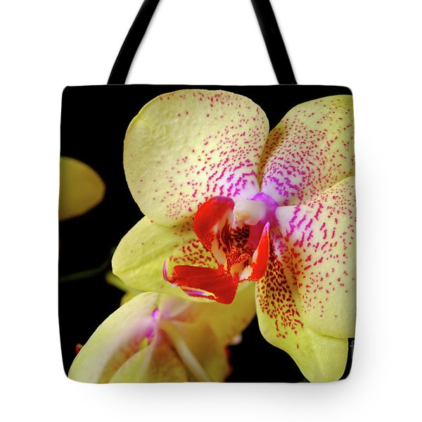 Tote Bag featuring the photograph Yellow Phalaenopsis Orchid by Dariusz Gudowicz