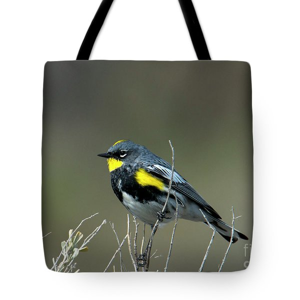 Tote Bag featuring the photograph Yellow-rumped Warbler by Mike Dawson