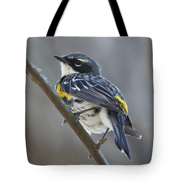 Yellow-rumped Warbler Portrait Tote Bag by Anita Oakley