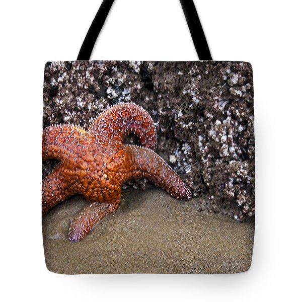 Orange Starfish On Beach #4 Tote Bag by Chuck Flewelling