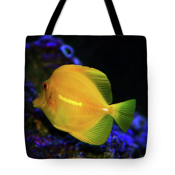 Tote Bag featuring the photograph Yellow Tang by Anthony Jones