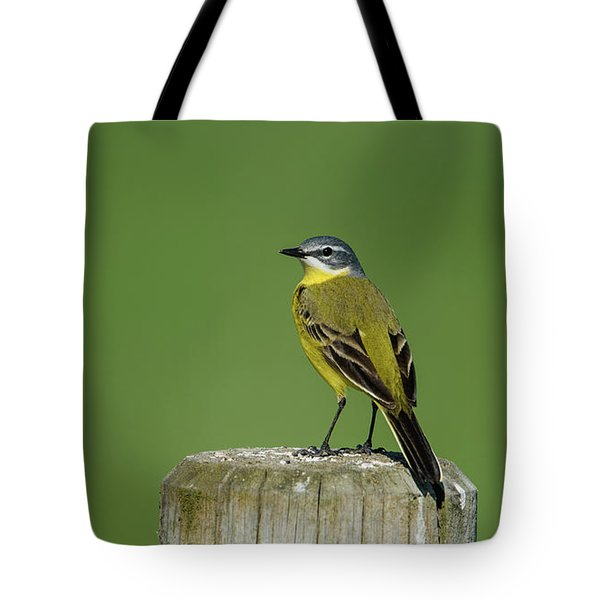 Yellow Wagtail Perching On The Roundpole Tote Bag