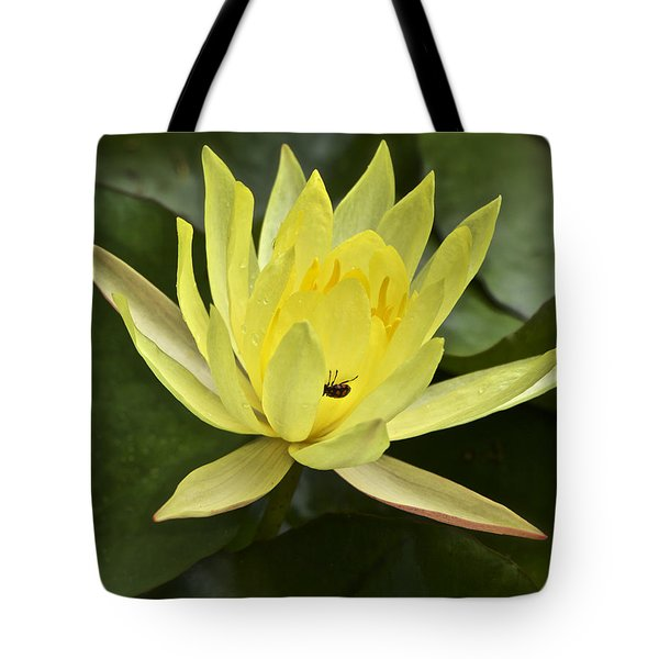 Yellow Waterlily With A Visiting Insect Tote Bag