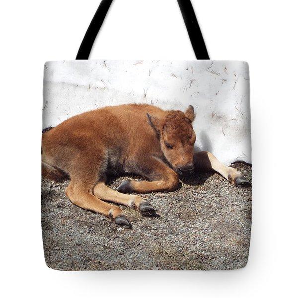 Yellowstone Bison Calf  Tote Bag