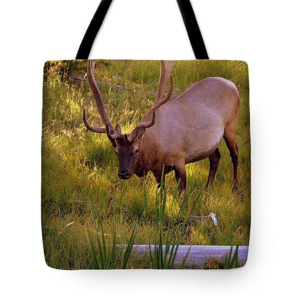 Yellowstone Bull Tote Bag by Marty Koch