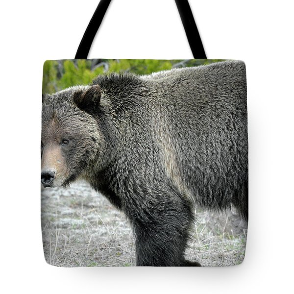 Tote Bag featuring the photograph Yellowstone Grizzly On The Hunt by Bruce Gourley