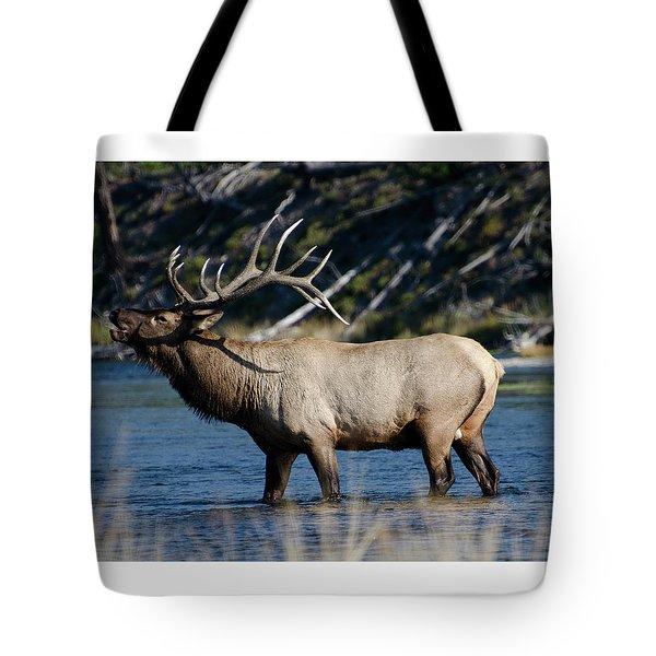 Yellowstone Park Elk Tote Bag