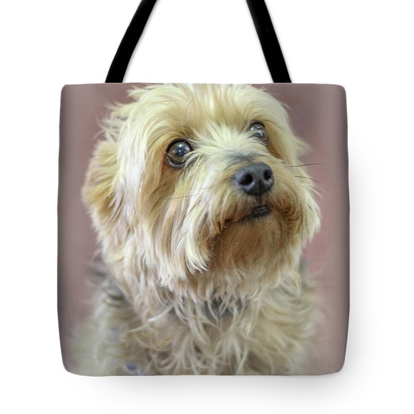 Yorkshire Terrier Tote Bag by Marion Johnson