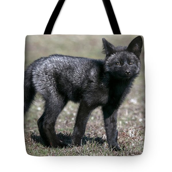 Tote Bag featuring the photograph Curious by Elvira Butler