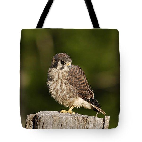 Young American Kestrel Tote Bag