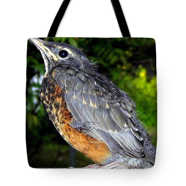 Young American Robin Tote Bag