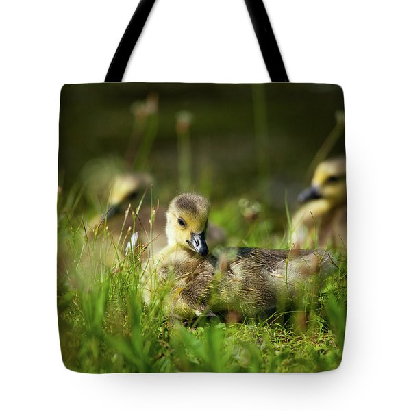 Tote Bag featuring the photograph Young And Adorable by Karol Livote