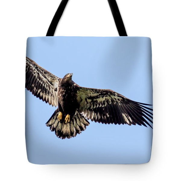 Young Bald Eagle Flight Tote Bag