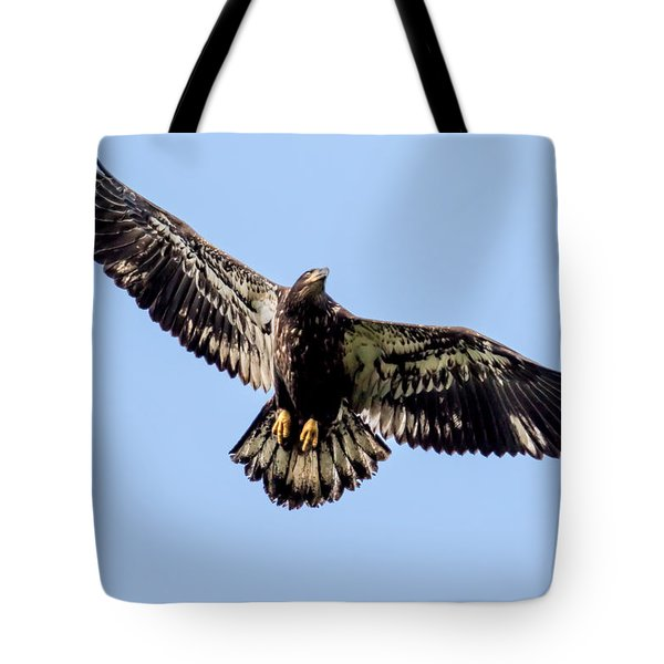 Young Bald Eagle Flight Tote Bag