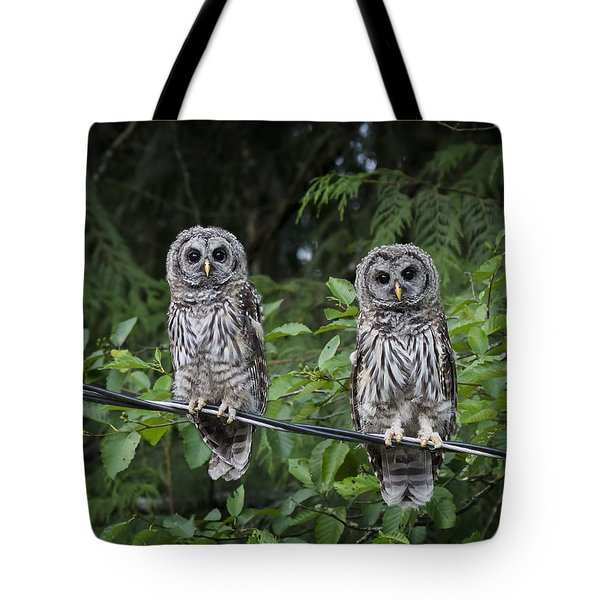 Young Barred Owls Tote Bag