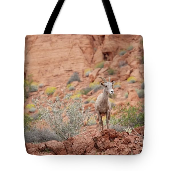 Tote Bag featuring the photograph Young Big Horn Sheep  by Patricia Davidson