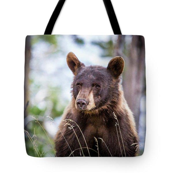 Young Black Bear Tote Bag by Dan Pearce