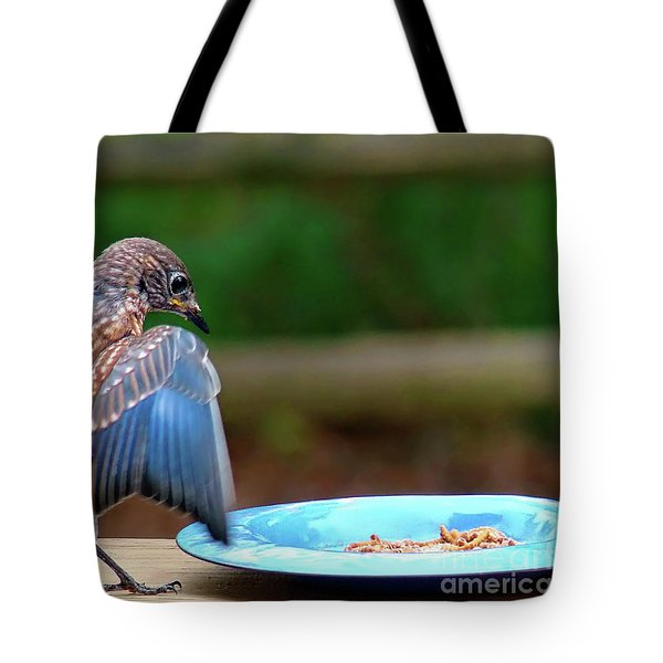 Tote Bag featuring the photograph Young Bluebird's Delight by Sue Melvin