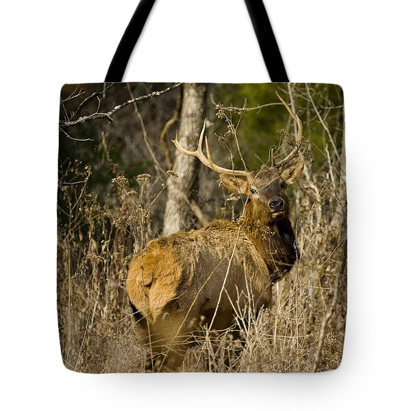 Tote Bag featuring the photograph Young Bull On A Woodland Trail by Michael Dougherty