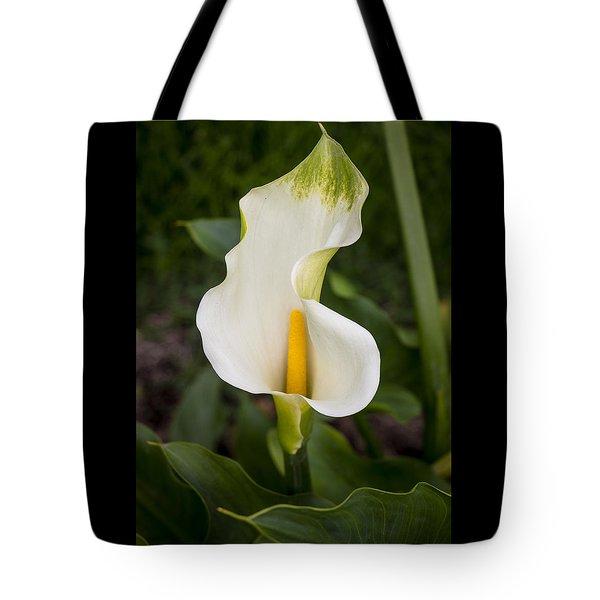 Young Calla Lily Tote Bag