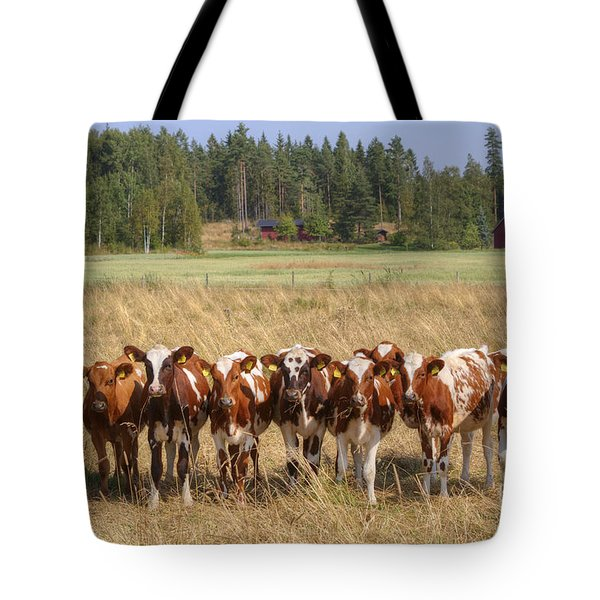 Young Calves On Pasture Tote Bag