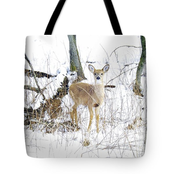 Young Doe And Spring Snow Tote Bag