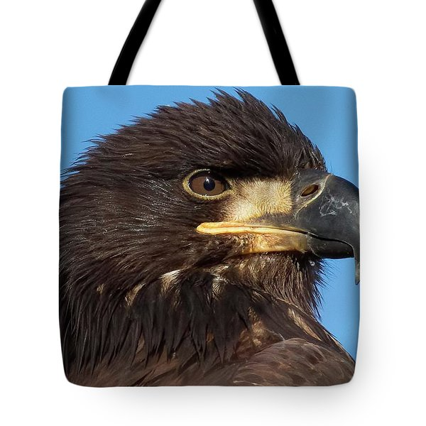 Young Eagle Head Tote Bag by Sheldon Bilsker