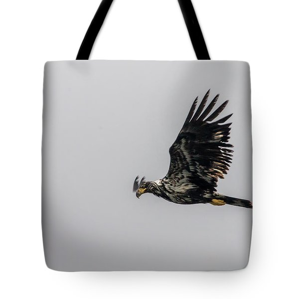 Young Eagle In Flight 07 Tote Bag by Timothy Latta