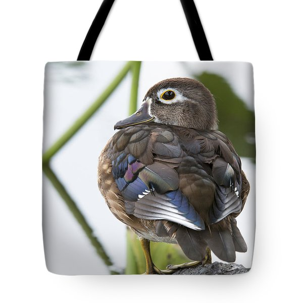 Young Female Wood Duck Tote Bag