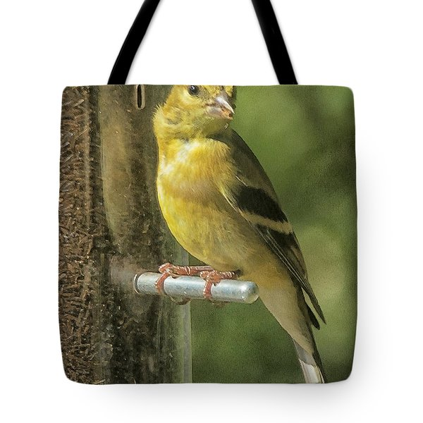 Tote Bag featuring the photograph Young Goldfinch by Constantine Gregory