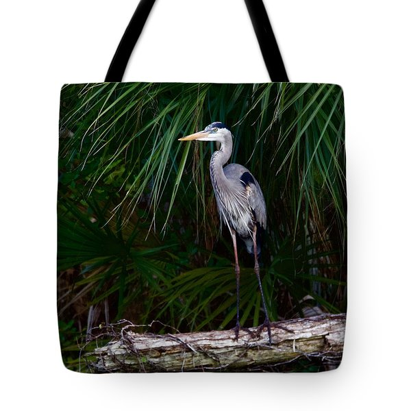 Young Great Blue Heron Tote Bag