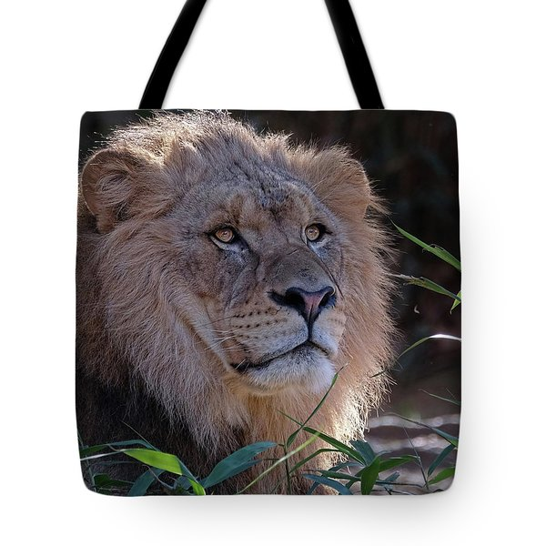 Young Lion King Tote Bag by Ronda Ryan