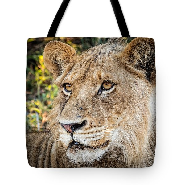 Tote Bag featuring the photograph Young  Male Lion by Stefan Nielsen