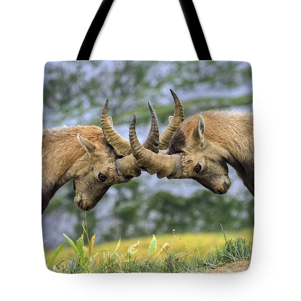 Young Male Wild Alpine, Capra Ibex, Or Steinbock Tote Bag by Elenarts - Elena Duvernay photo