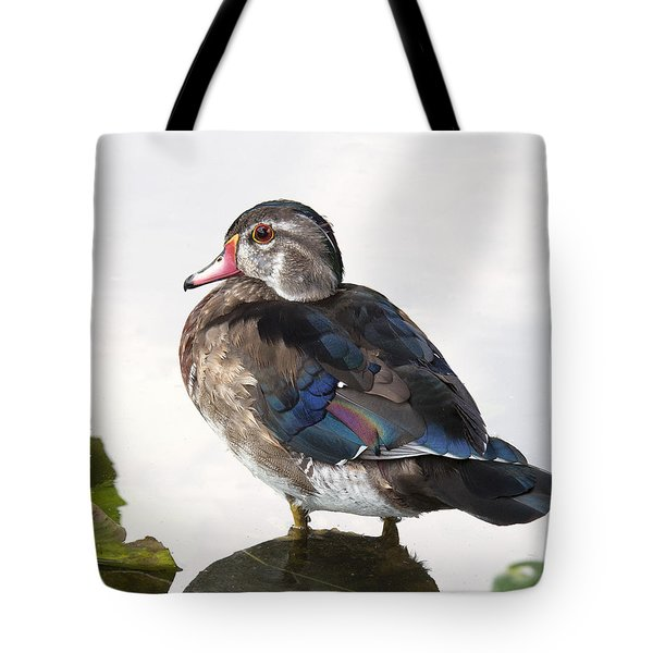 Young Male Wood Duck Tote Bag