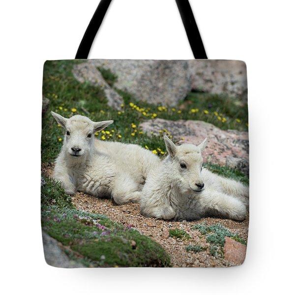 Young Mountain Goats Tote Bag