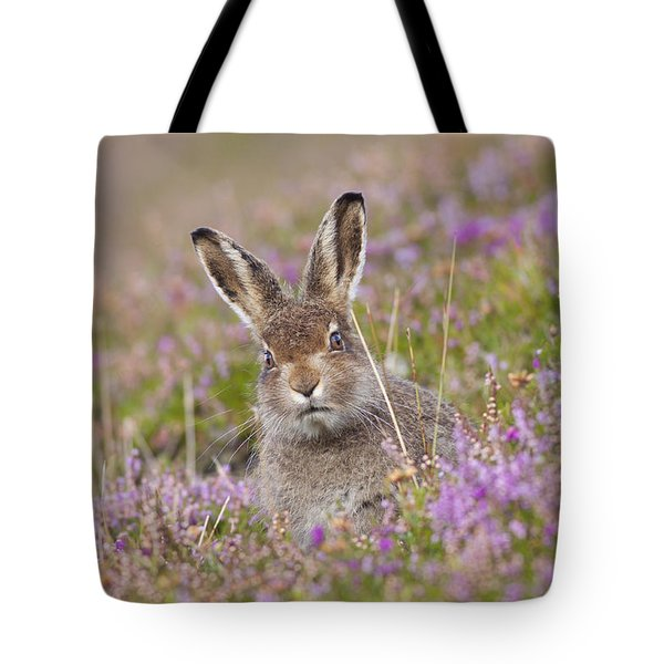 Young Mountain Hare In Purple Heather Tote Bag