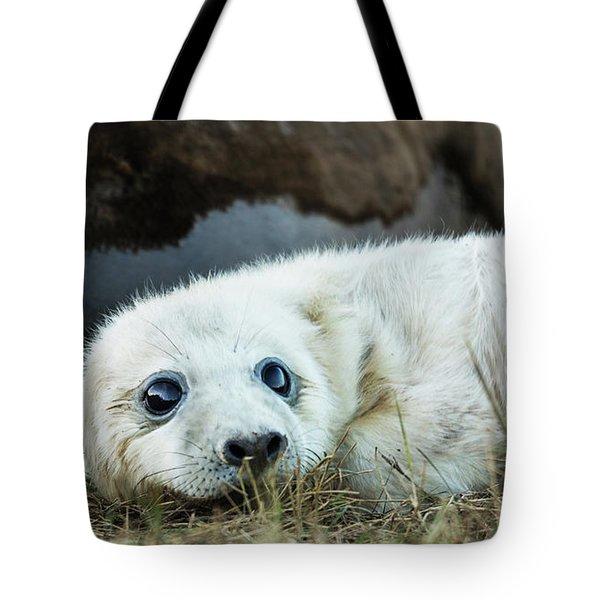 Young Pup Tote Bag
