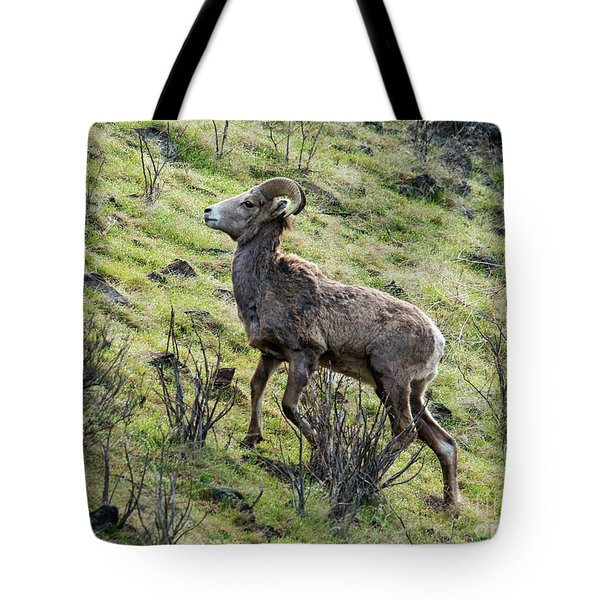 Tote Bag featuring the photograph Young Ram Climbing by Mike Dawson