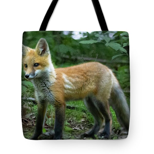 Young Red Fox Looking To Play Tote Bag