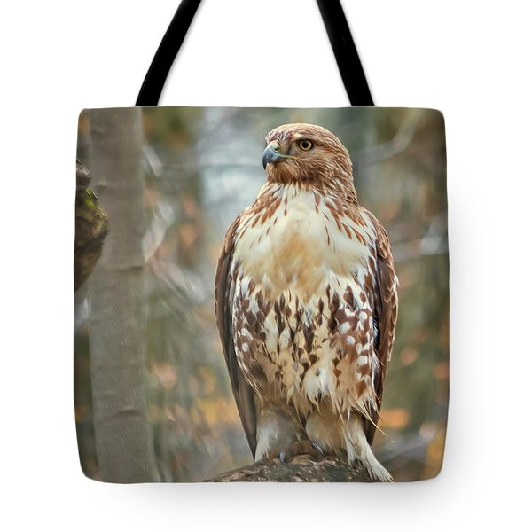 Young Red Tailed Hawk  Tote Bag