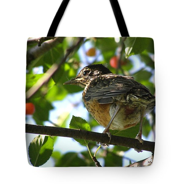 Tote Bag featuring the photograph Young Robin by Angie Rea