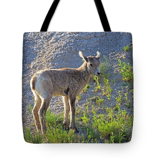 Young Rocky Mountain Bighorn Sheep Tote Bag by Louise Heusinkveld