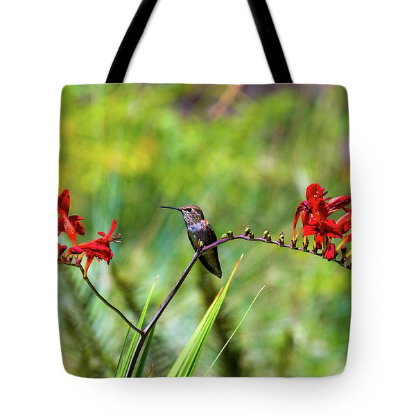 Young Rufous Hummingbird Perched On Flower Tote Bag