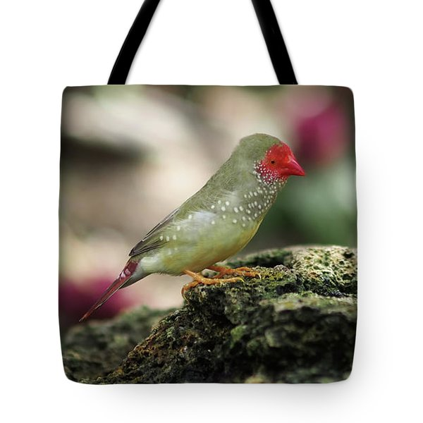 Young Star Finch Tote Bag