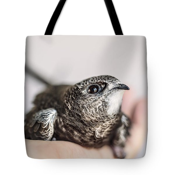 Young Swift Tote Bag