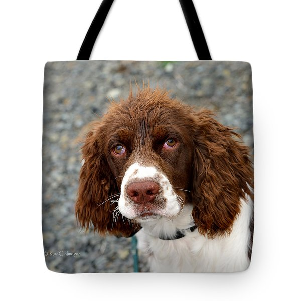Young Water Spaniel Tote Bag