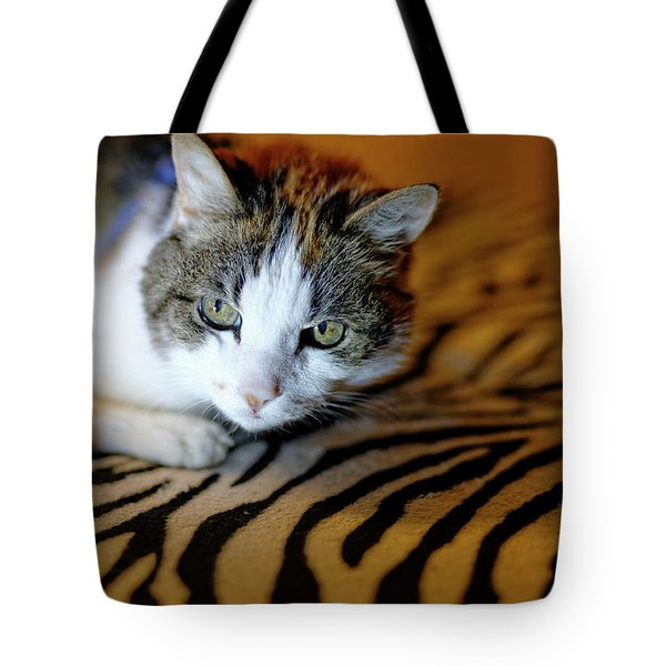 Zebra Cat Tote Bag
