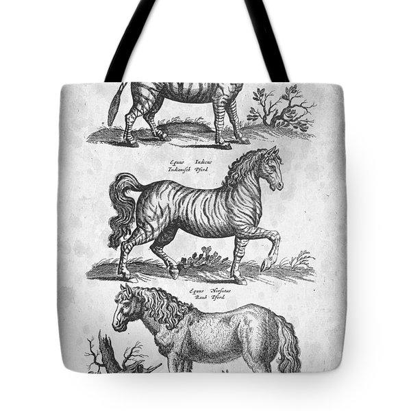 Zebra Historiae Naturalis 1657 Tote Bag